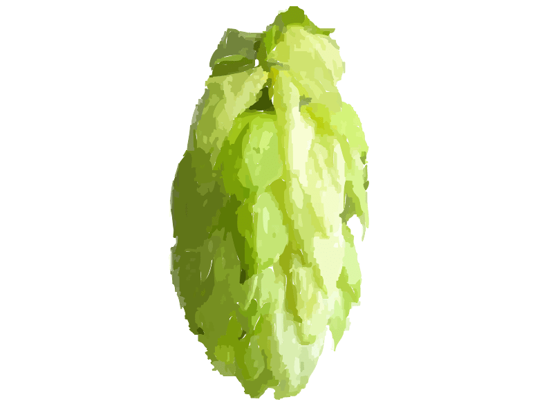 Galena Hop: For Hard Cider