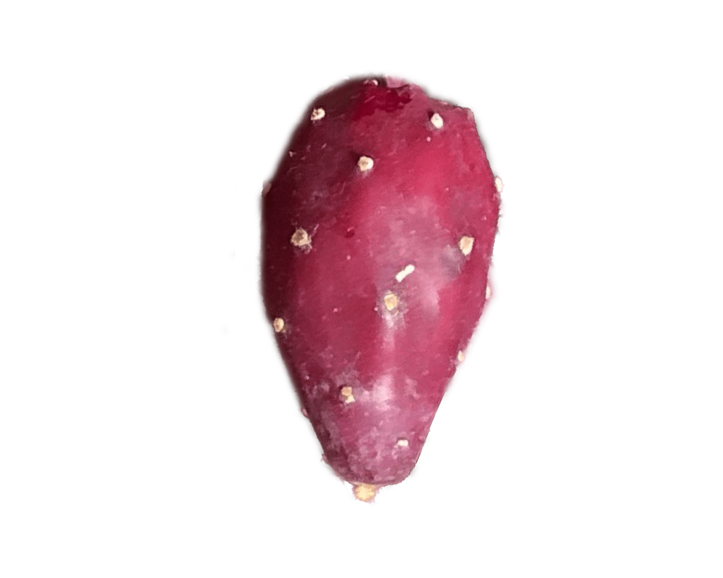 Prickly Pear Fruit for Hard Cider