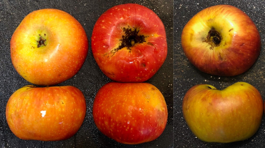 Apples of Unknown Origin