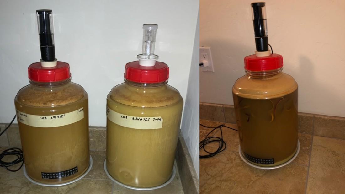Fermenting Hard Cider