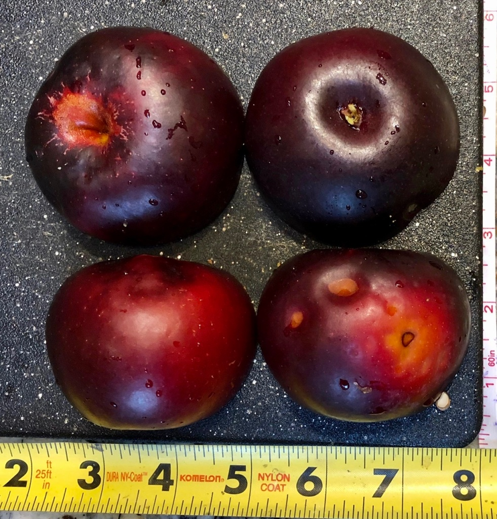 Heirloom Apple: Arkansas Black