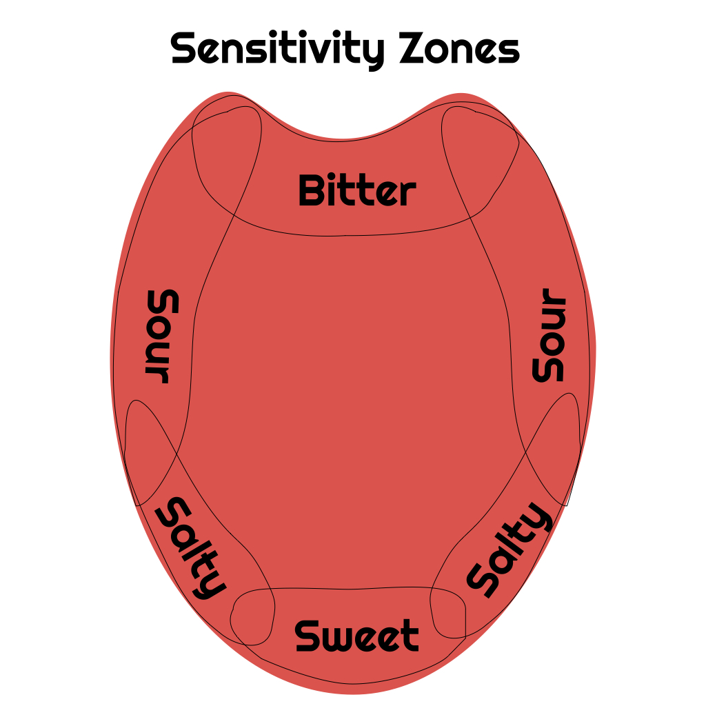 Sensitivity Zones: Areas of the tongue that are often more sensitive.