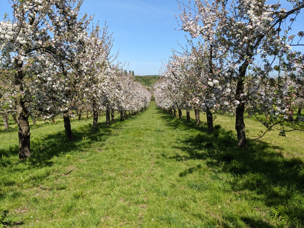 South Somerset Orchard in Bloom