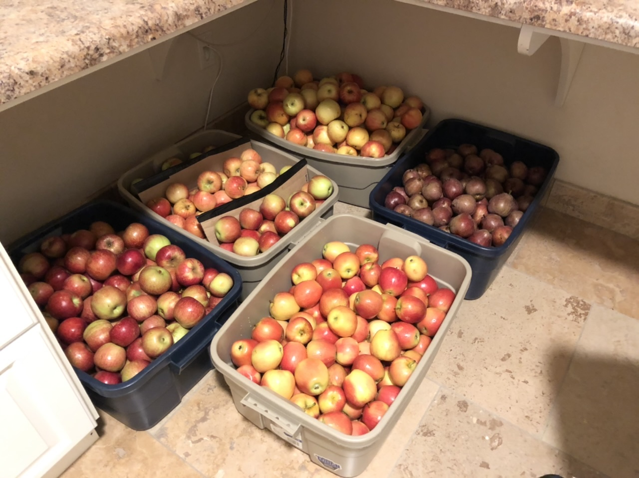 Sweating Apples at Home
