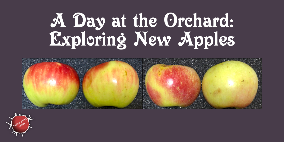 Exploring New Apple Varieties