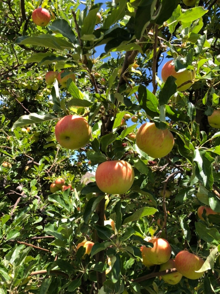 Angle Orchard Apples