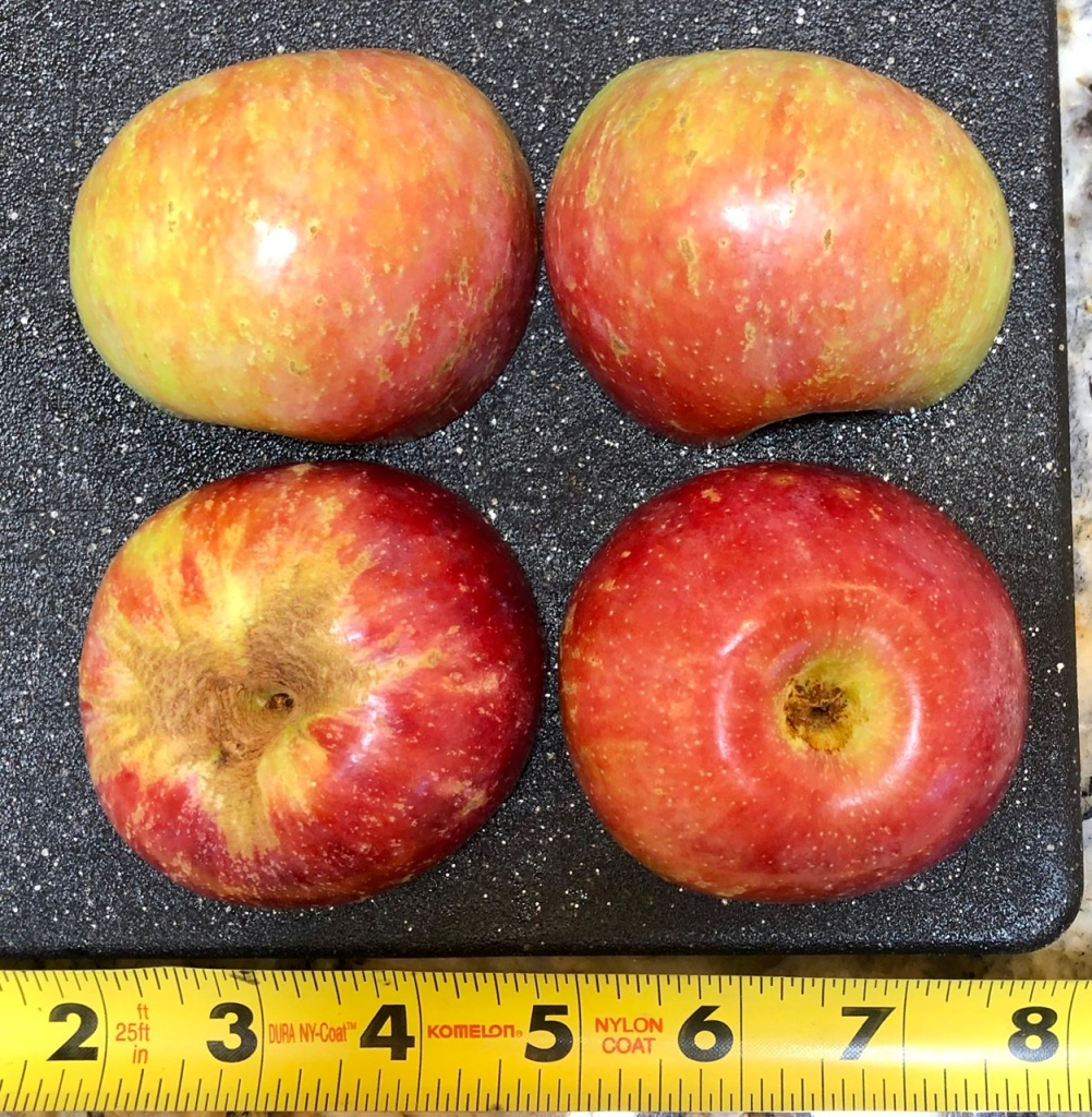 Rootstock Apple: Exterior
