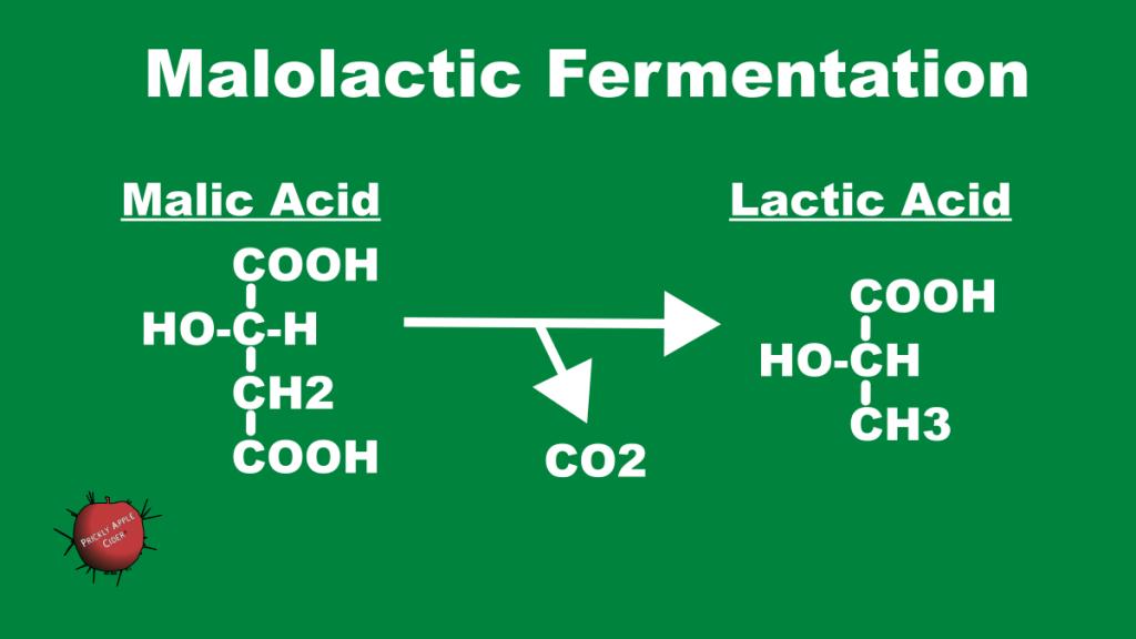 Malolactic Fermentation