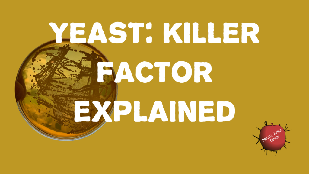 Yeast Killer Factor: What does it mean and how could it impact your cider.