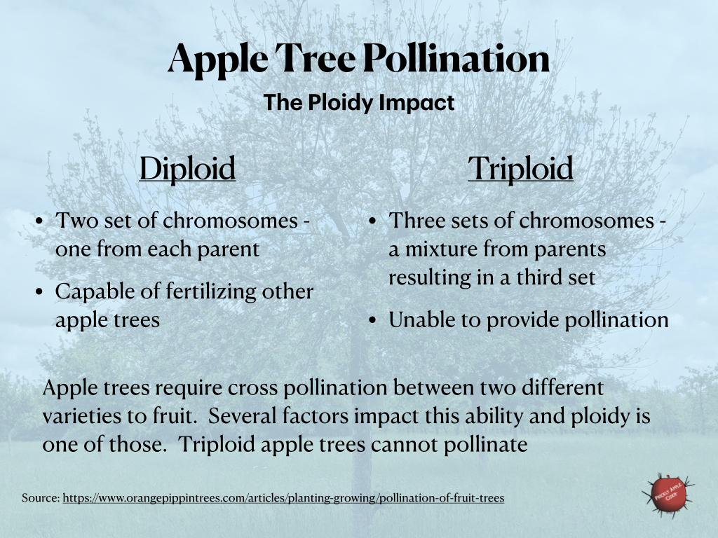 The impact of ploidy on apple tree pollination.