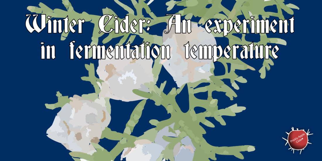 Winter Cider: Experimenting with Fermentation Temperature