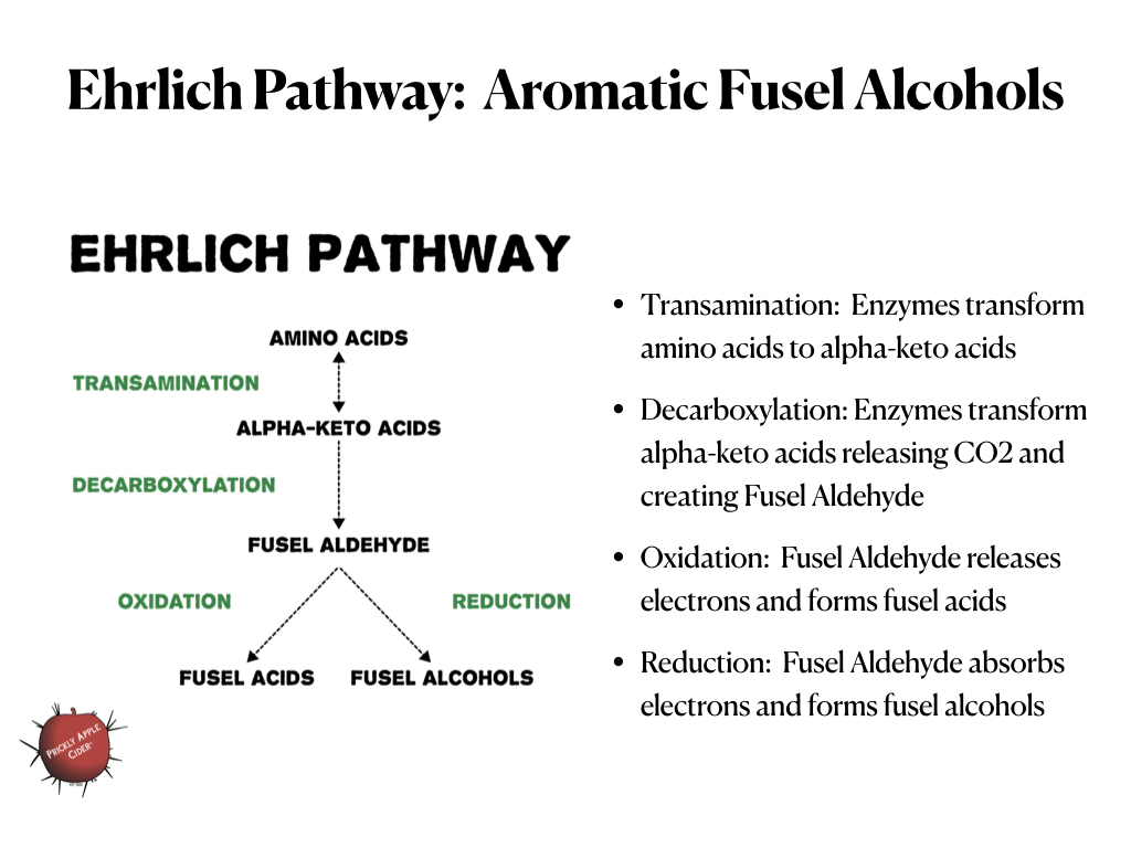 Ehrlich Pathway: Fusel Alcohol Creation