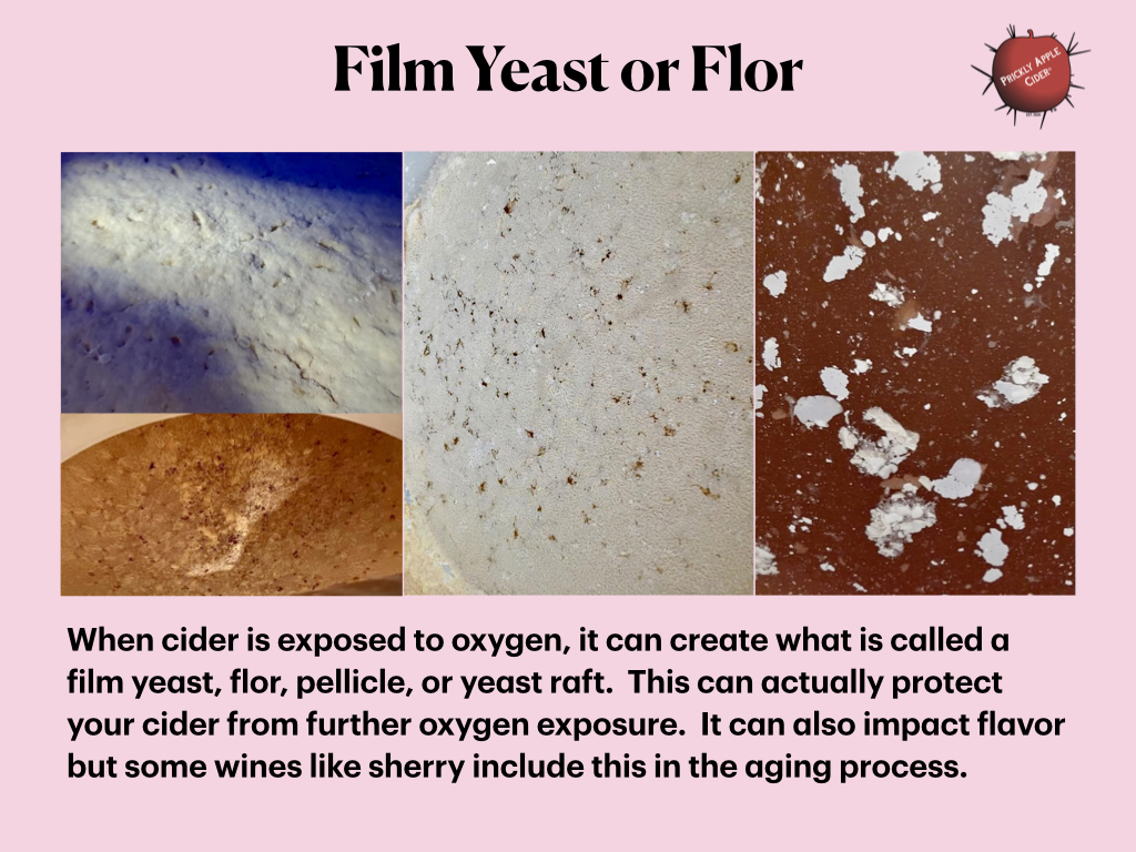 A layer or film formed by yeast on the top of hard cider when exposed to oxygen during storage