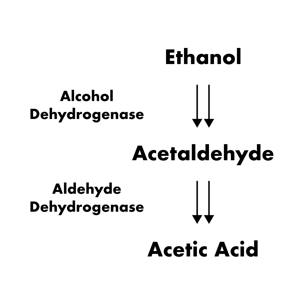 Acetic Acid Pathway - During Maturation