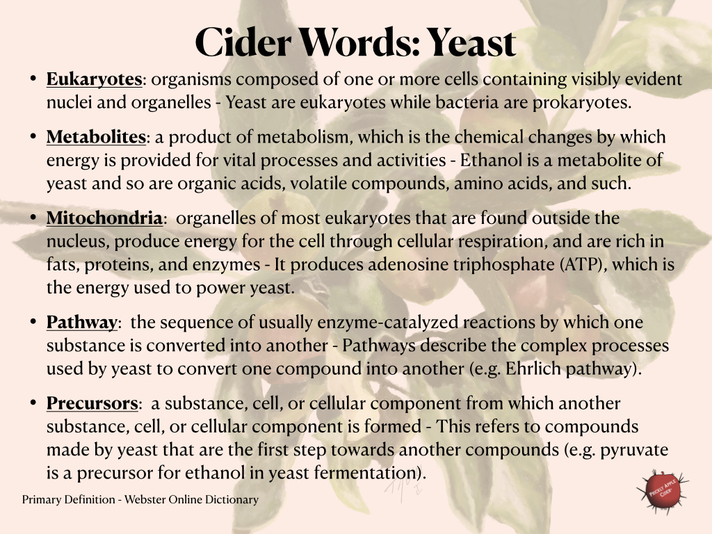 Words related to yeast and their impact on hard cider